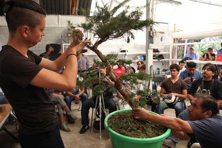 Bonsai demonstration01