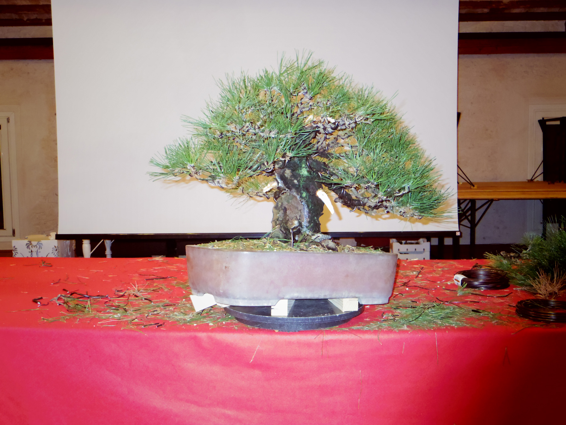 Bonsai Warrior Bonsai Master Masashi Hirao Ç›†æ½å¸« Ź³å°¾æˆå¿—